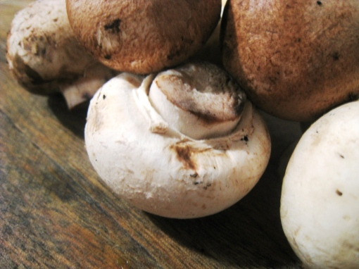 enteng_mushroom-cheese-00