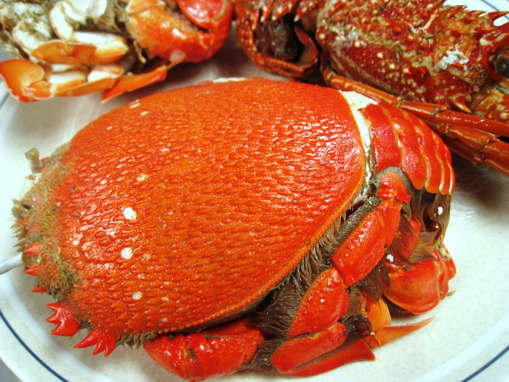 Curacha Crab Zamboanga