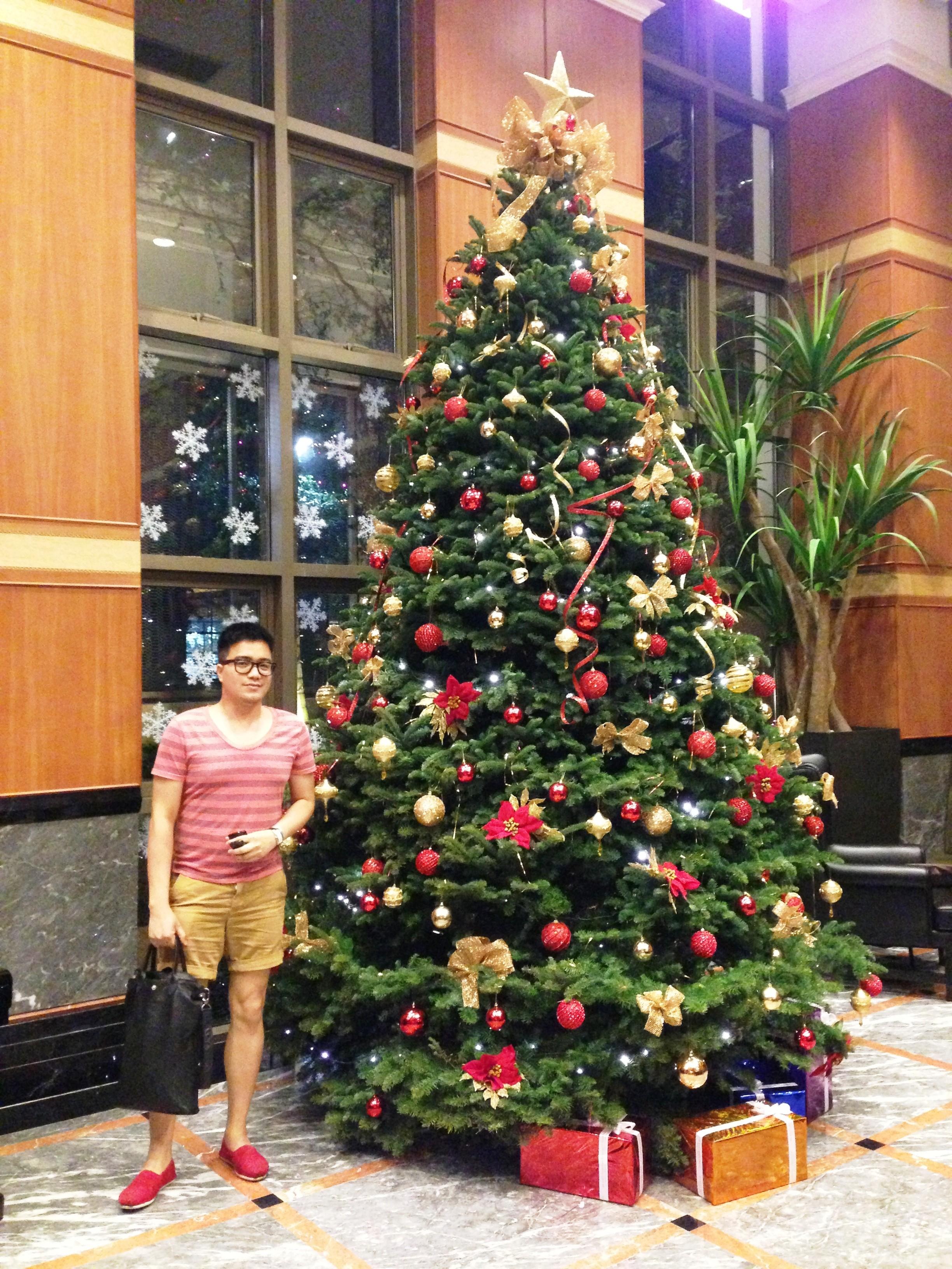 "Italian Lunch – Solo 00 Christmas Tree   eNTeNG c"",)™©'s ..."