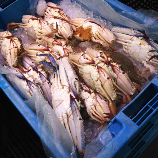 The blue crates hold these blue crabs (blue for blue... it matches!).  A total of five, each with a couple or three layers of crabs.  By the  time I got there, there was only one crate left, with only one layer!  My luck!